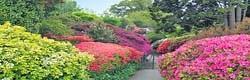 Leonards Lee Garden